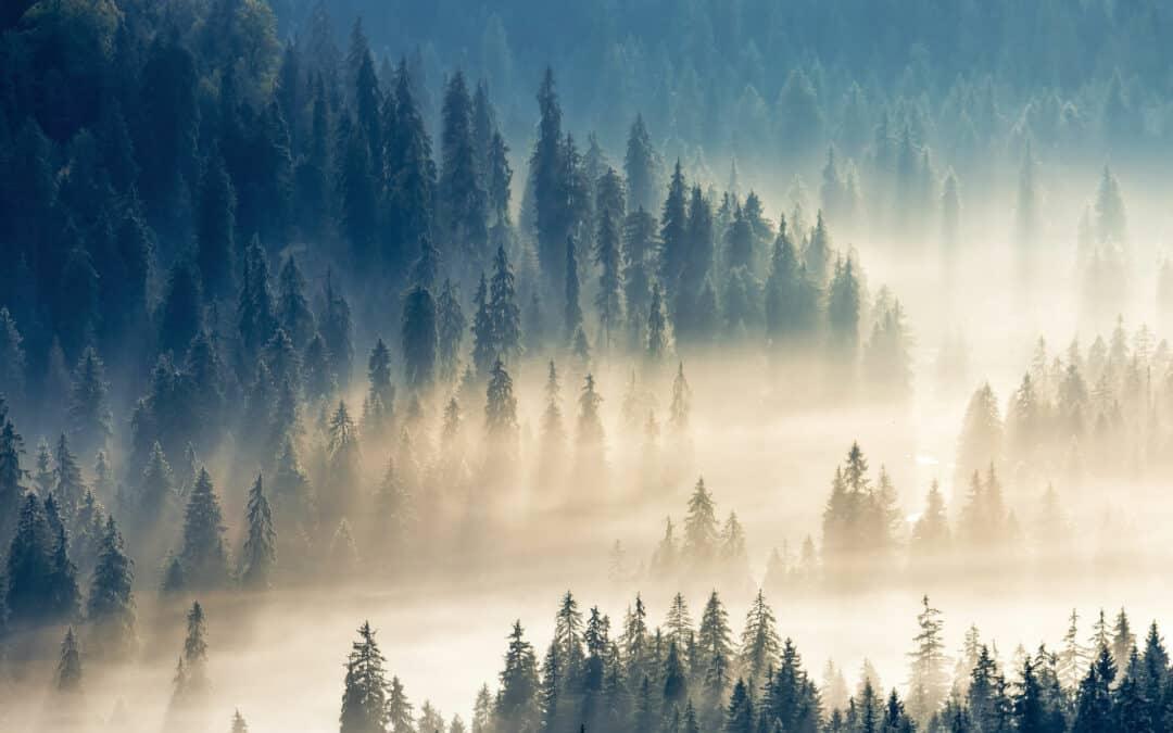 "Lifting The Fog On ""Foggy Mountain Breakdown"""